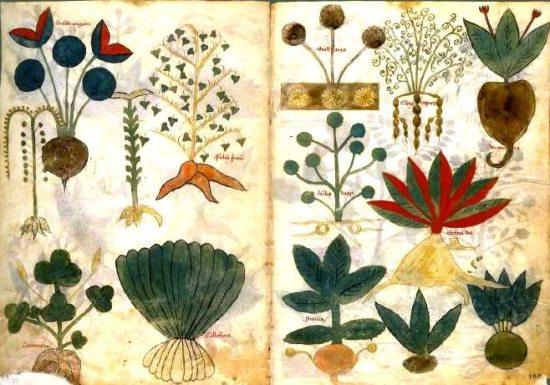 herbarium5